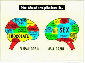 gender brains